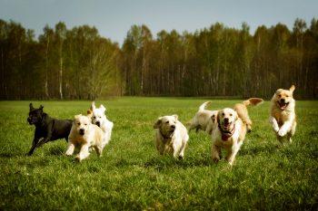 Gewond door een hond, is mijn schade te verhalen?