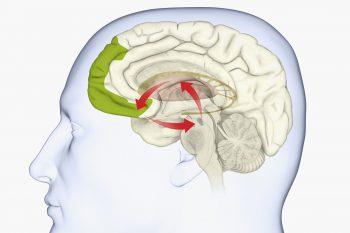 De invloed van de substantia nigra bij de ziekte van Parkinson